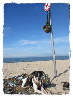 Erster Tag am Strand - Hundestrand - wohl abgrenzt - wir haben mal unseren Senf dazu gegeben - liebe Kerstin!!!