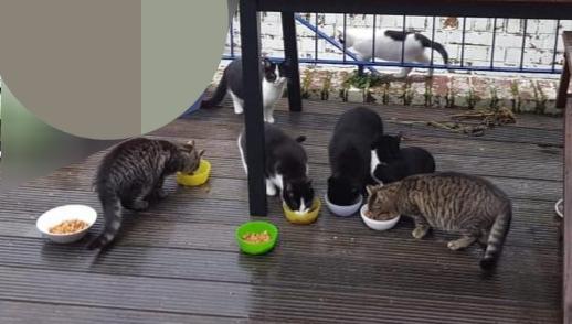 gegessen wird brav am Tisch ;-)