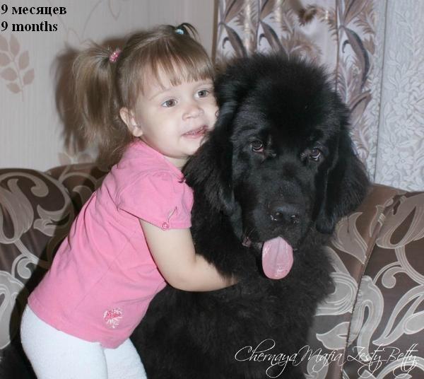 ньюфаундленд Chernaya Mafia Zesty Betty