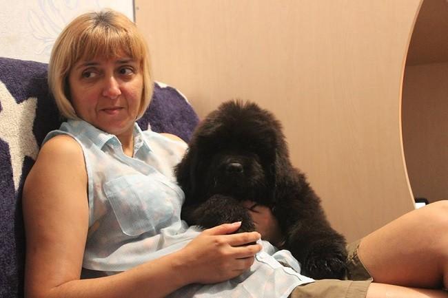ньюфаундленд Chernaya Mafia She is a Lady 2 месяца / 2 months