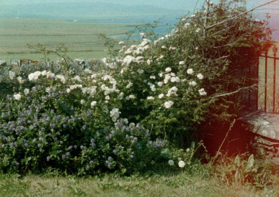 """Ute Aurand, """"Glimpses from a Visit to Orkney in Summer 1995"""", 2020, Video Still, 16mm, 5min"""