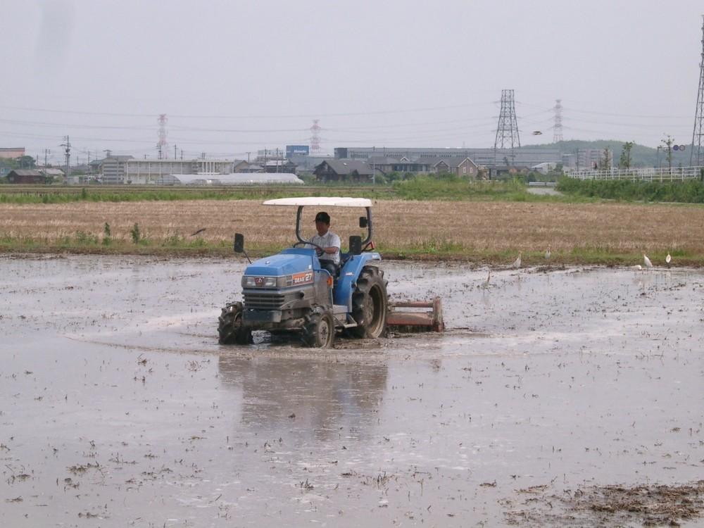 田んぼに水が入ったら大事な作業、代搔き(しろかき)。田んぼの高さを均一にするための、技術が要る作業です。
