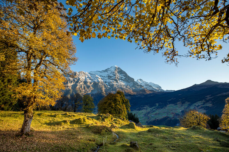Grindelwald  in autumn