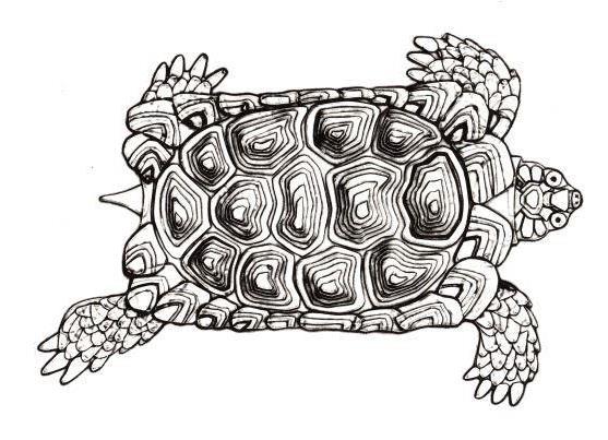 12 gravures originales de Marine Rivoal en écho aux inspirations du Faune