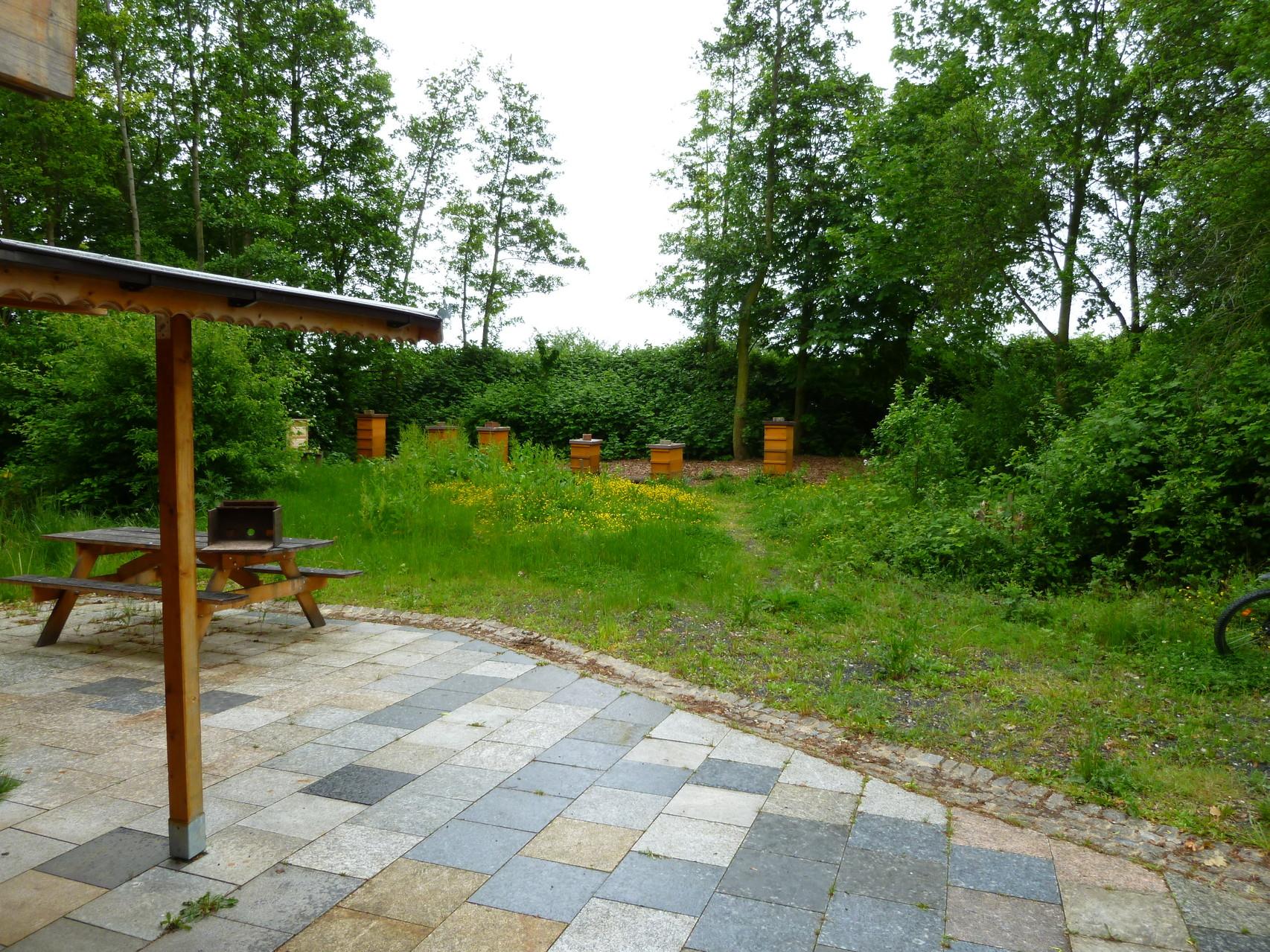 Blick in den Bienen-Garten