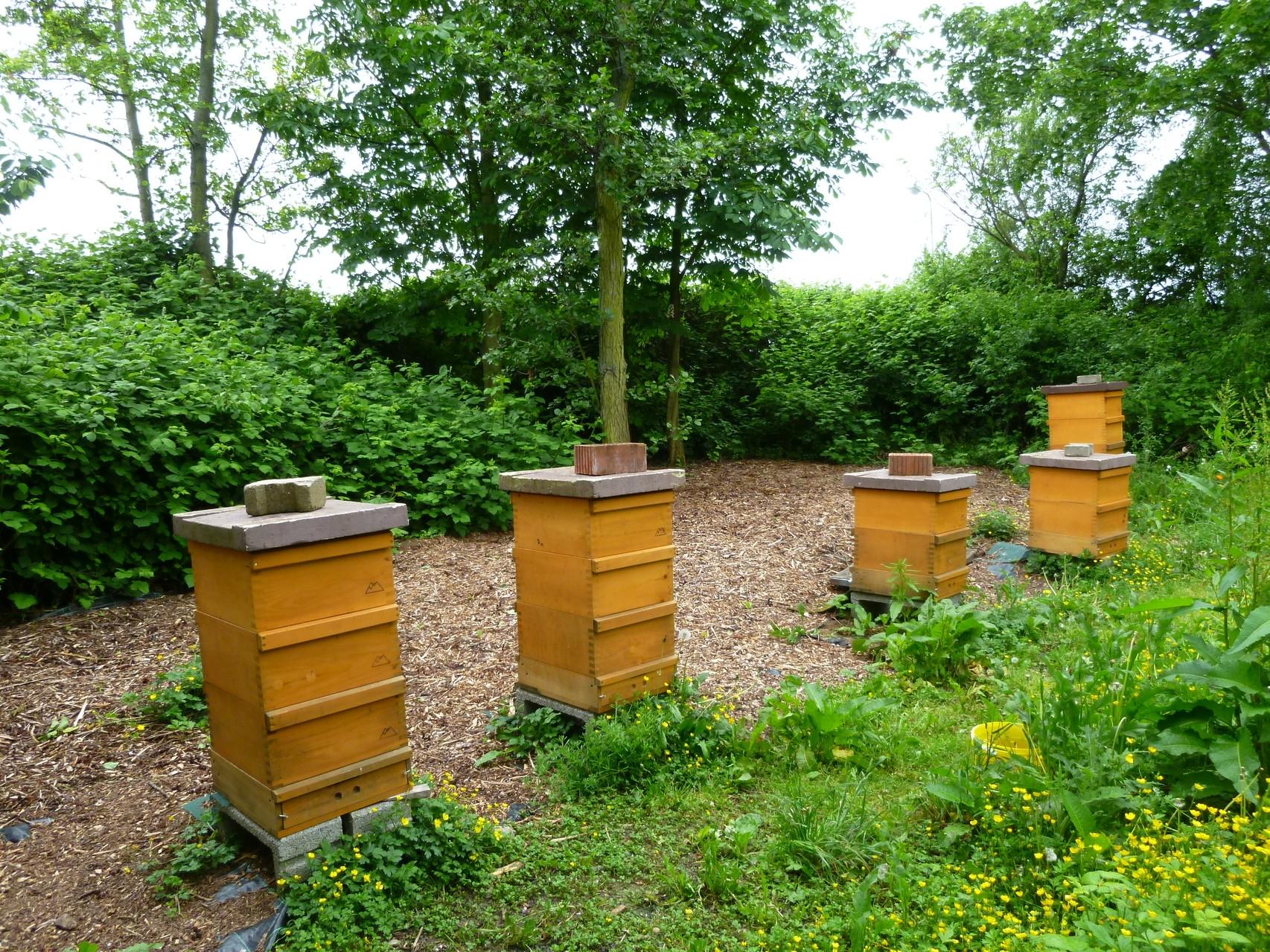 Unsere Bienen-Völker