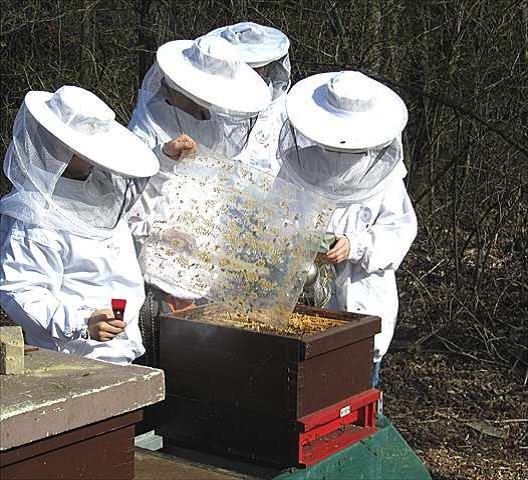 Arbeit am Bienenvolk 1