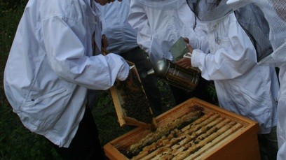 Arbeit am Bienenvolk 3