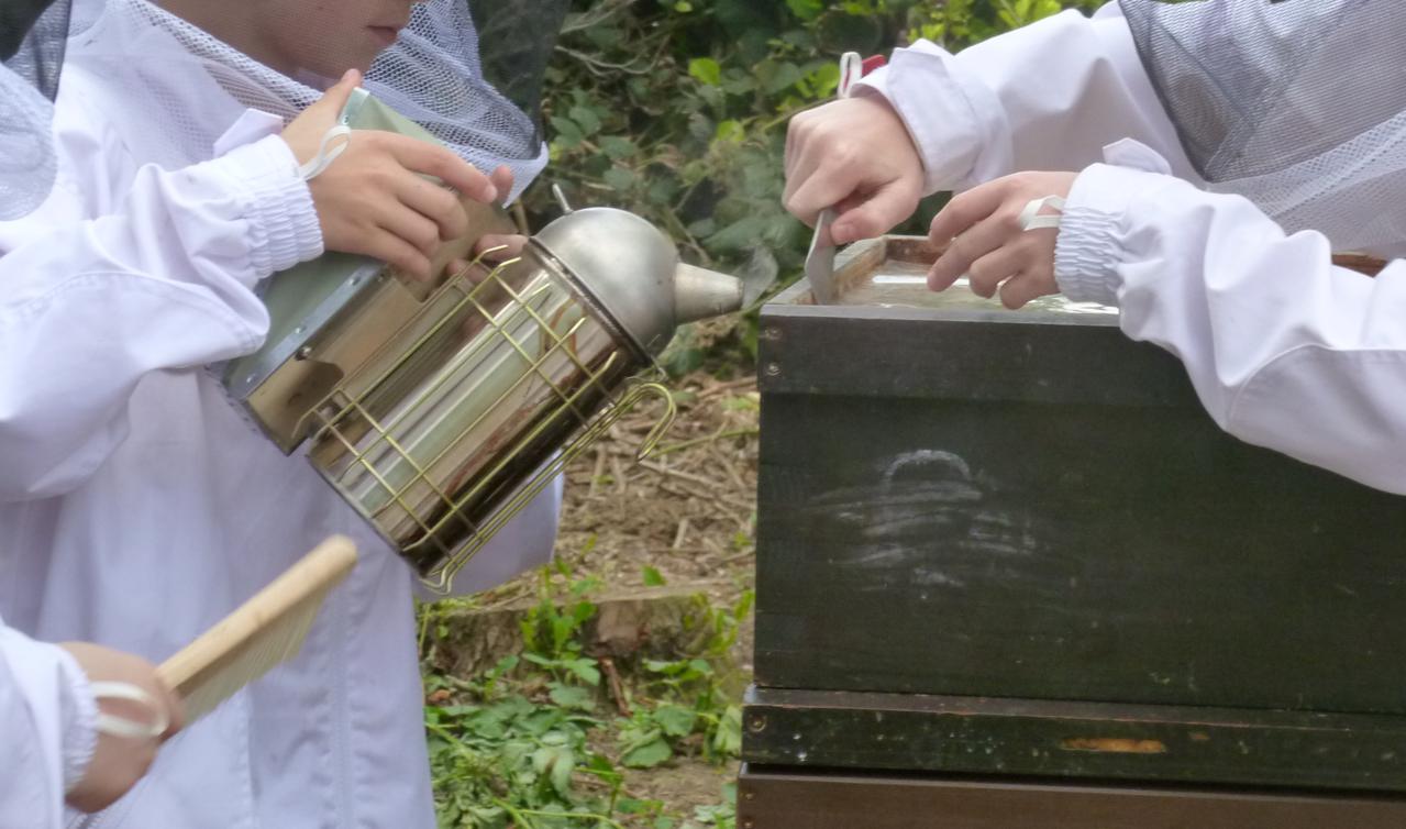 Arbeit am Bienenvolk 2