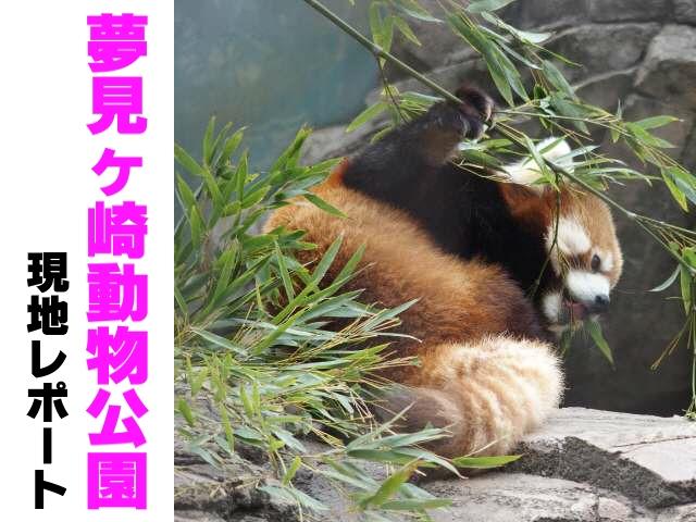 動物園訪問レポ(夢見ヶ崎動物公園・神奈川)その1