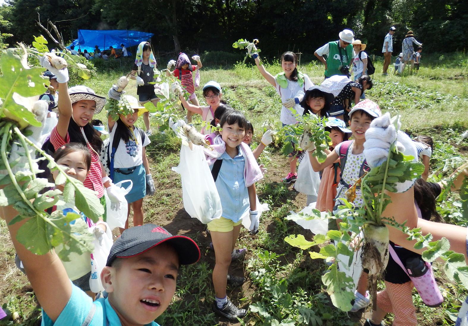 2015 遠足先にてお野菜を収穫