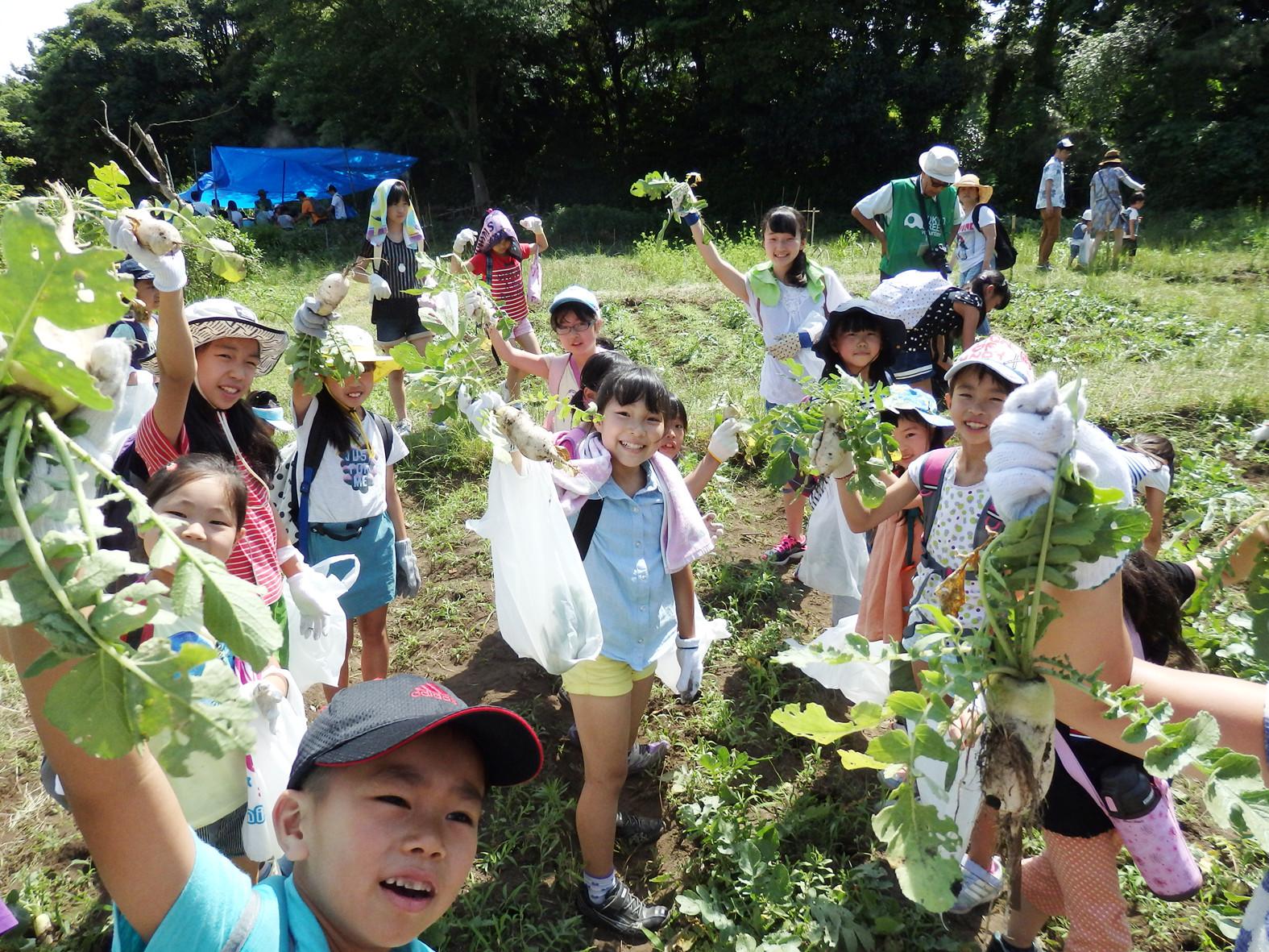 2015 遠足 野菜収穫