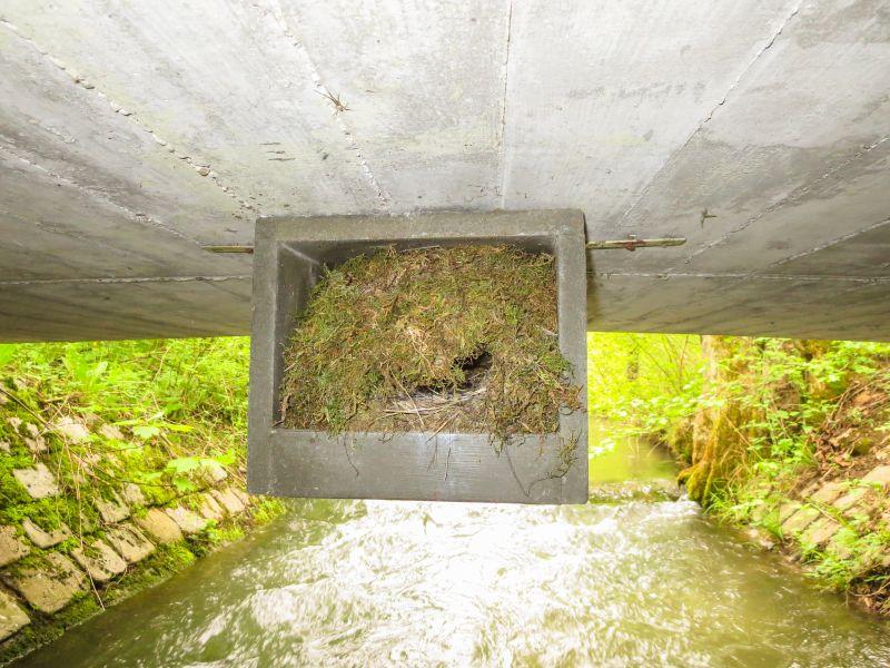 Ein typisches Nest der Wasseramsel