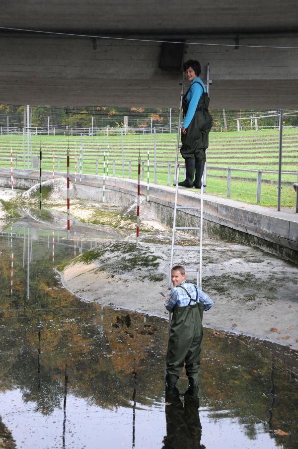 Manchmal hängen die Wasseramselkästen ziemlich hoch...
