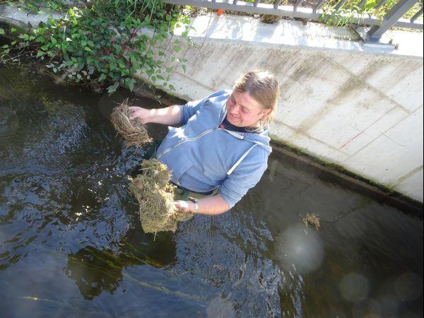 Gleich ein doppelter Erfolg: Wasseramselnest IM und ein weiteres Nest AUF dem Nistkasten