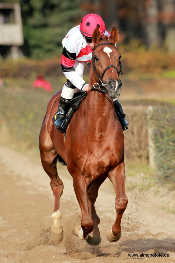 Lindentree mit Andreas Suborics - Aufgalopp - Pferderennen