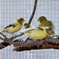 Ziervögel & freilebende Vögel