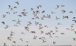 Tauben Landhandel Schieren