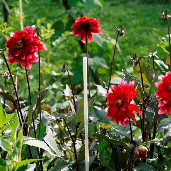 Vinotto® Glasfaserstab 7.5-1400 - Pflanzstab für Blumen
