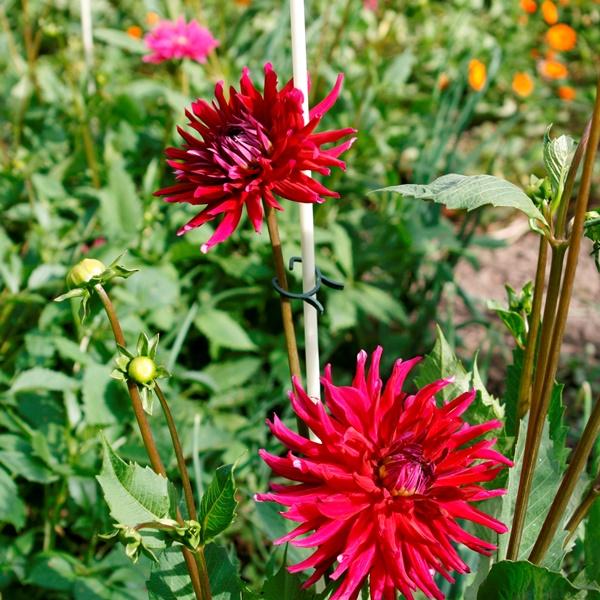 Vinotto® GFK-Stab 7-1400 - Pflanzstütze im Garten