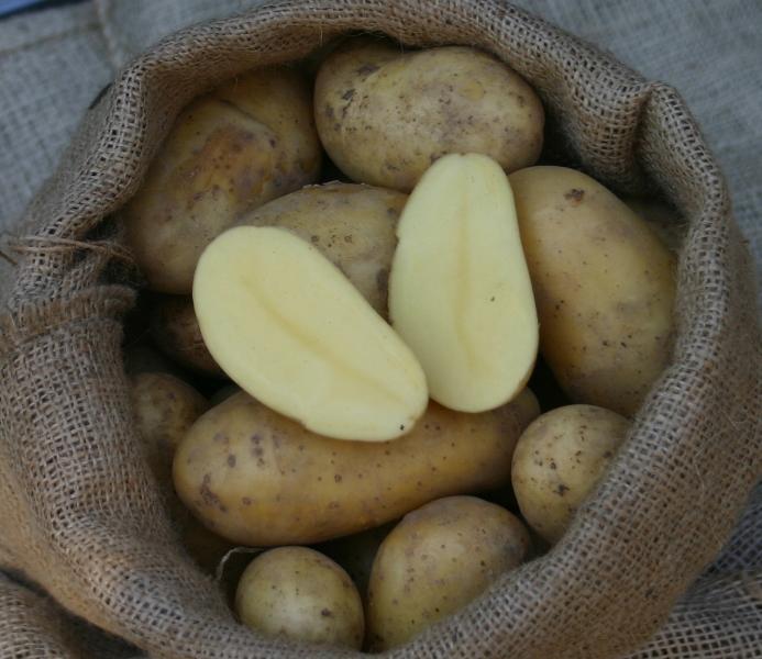 PFLANZKARTOFFEL ANNABELLE 2,5 kg Pflanzkartoffeln zertifiziert Saatkartoffel