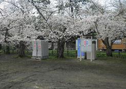弘前さくら祭の仮設トイレ