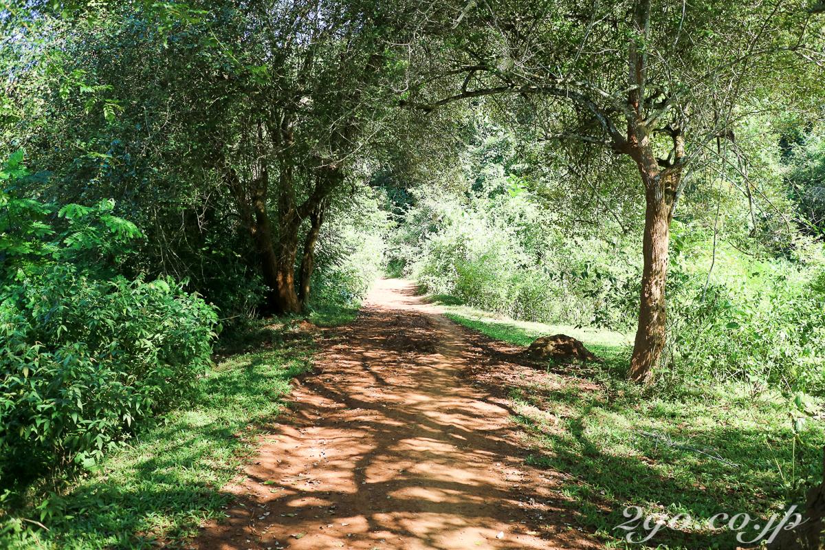 日差しのある道は肌をじりじりと焼く、木陰がある道はありがたい。