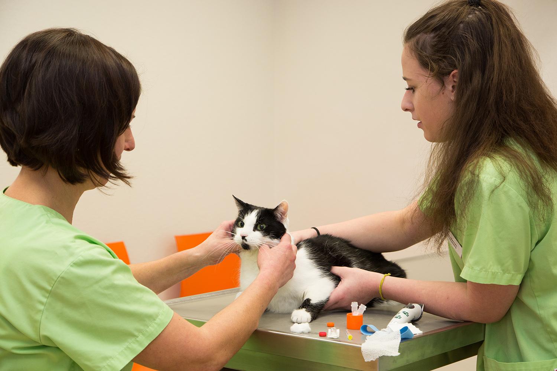sind wir eingerichtet, um Ihr Haustier bestmöglich zu versorgen.