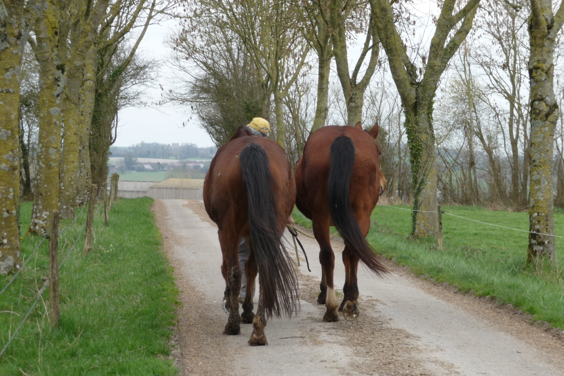 Balade à cheval autour de la ferme