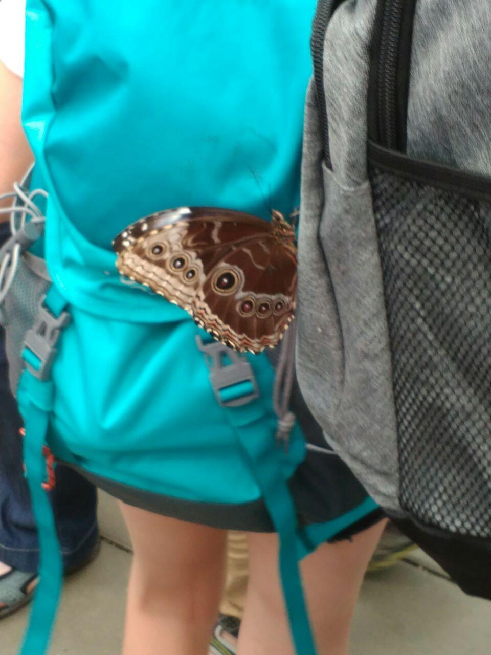 Auf der Gartenschau in Pfaffenhofen setzt sich tatsächlich ein Schmetterling auf uns...