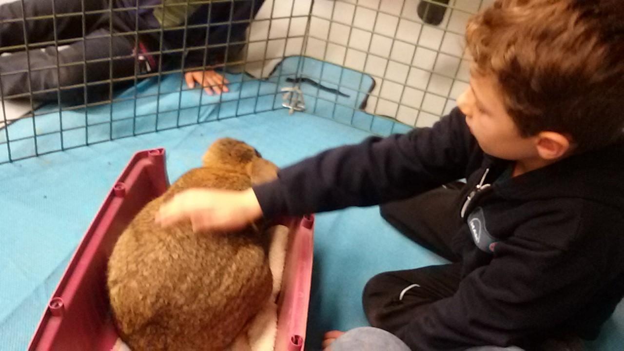 Der Hase Hoppel besucht im Rahmen des Tierprojekts die Kinder im Hort