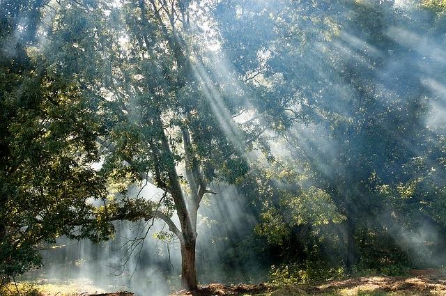 Lichtstrahl durch Baum