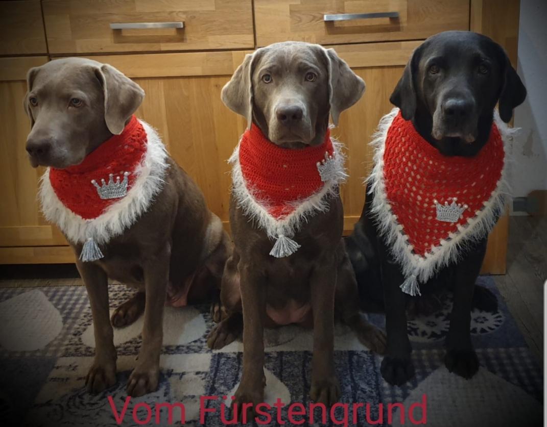 Wir wünschen euch einen schönen Dezember