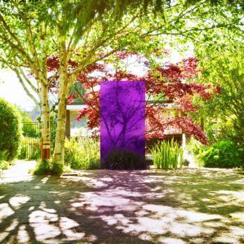 Knumox Aero Serie, Farbe lavara im Garten vor einem Acer Palmatum dissectum