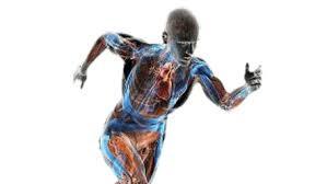 Faszienketten sorgen für eine gesamtheitlich effiziente Bewegungsorganisation. (mwoveeducation.com/ Carla B. Sottovia, Ph. D.)