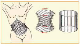 Faszien - Zylinder, der die Aufrichtung des Brustkorbes mit jedem Schritt dynamisch unterstützt. (Courtesy of Erik Dalton)