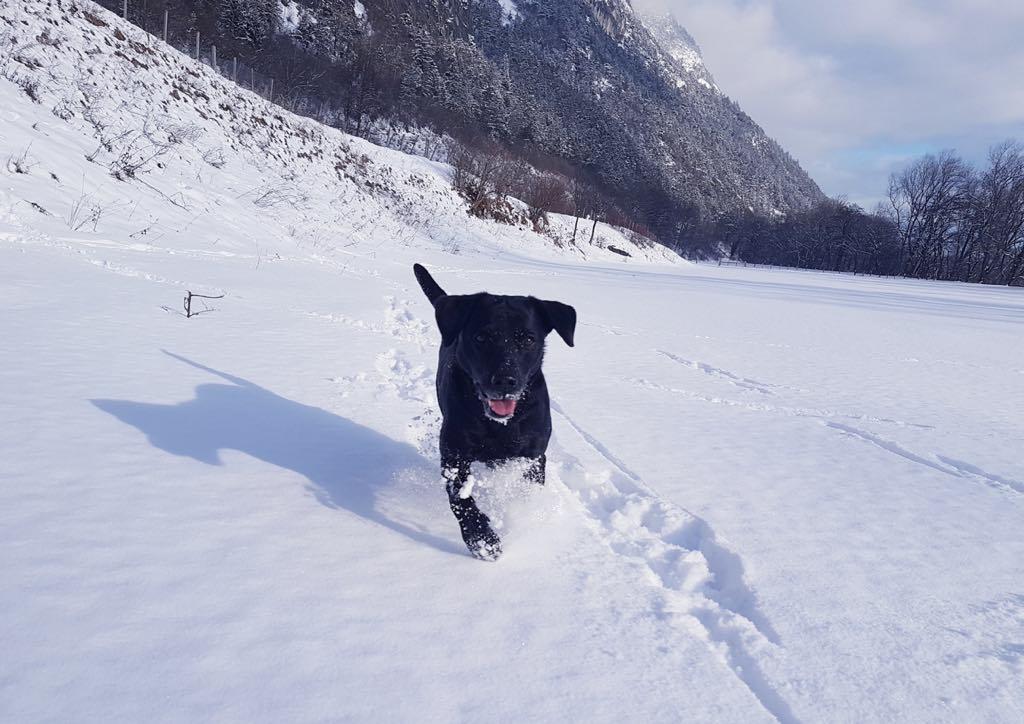 Ivy genießt den Schnee