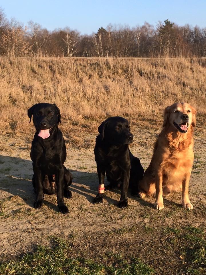 Django mit Gustav und Yoyo