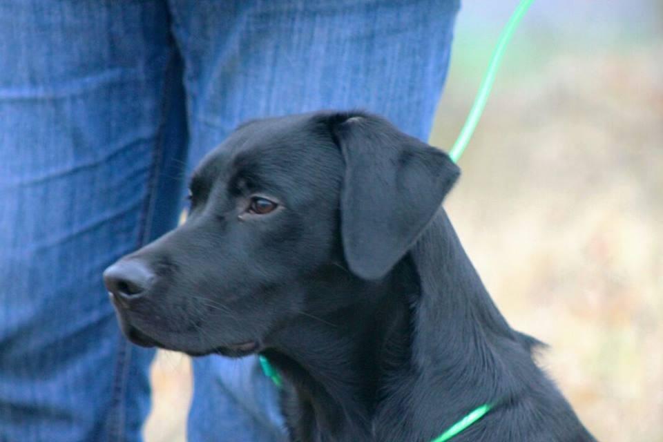 Baxter 7 Monate
