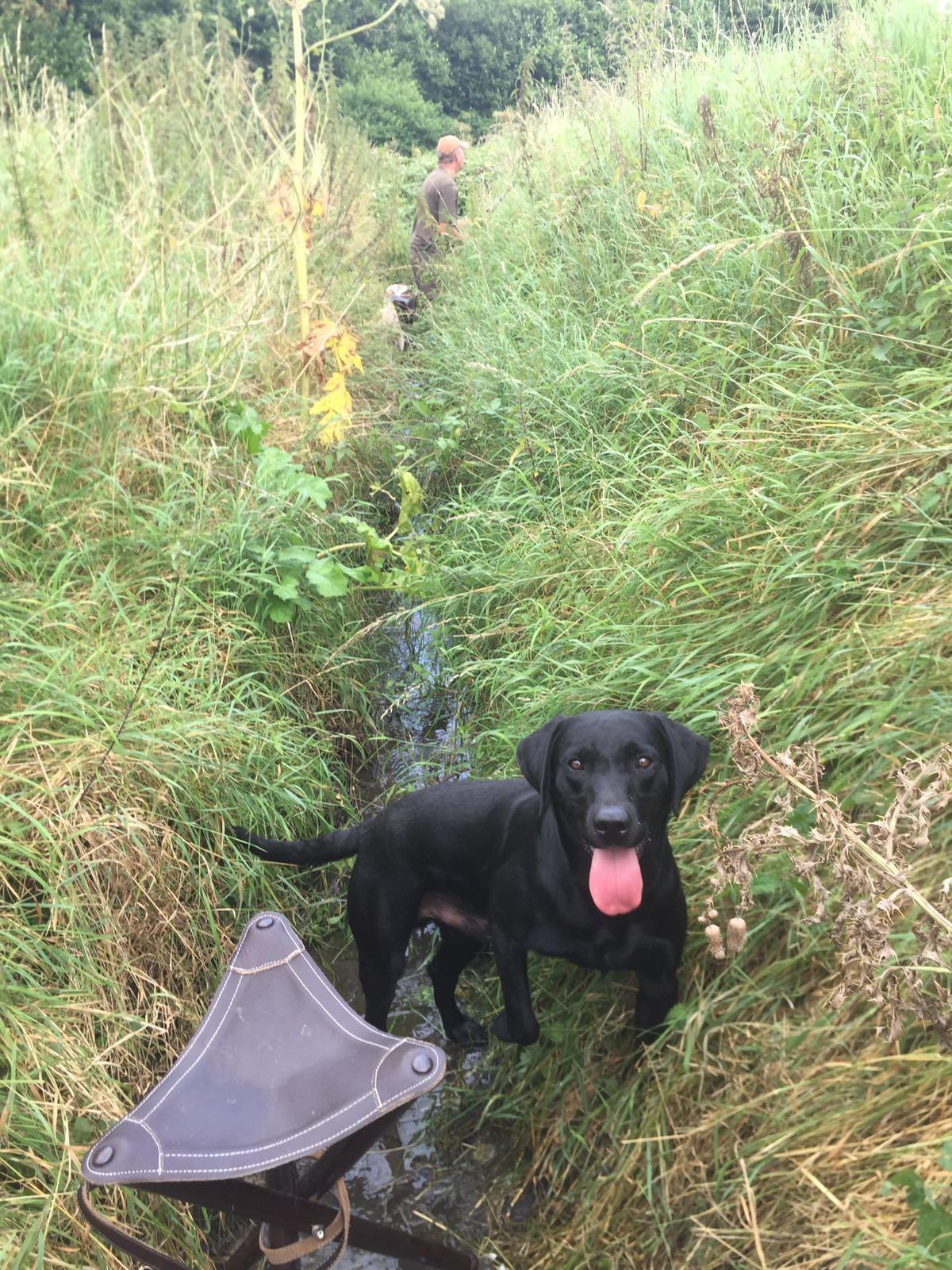 Milly auf der Jagd