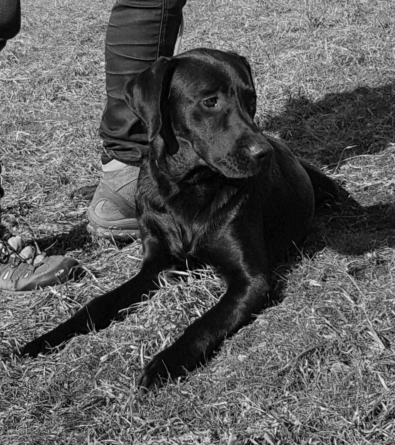 Darwin mit über 9 Monaten ganz entspannt im Training