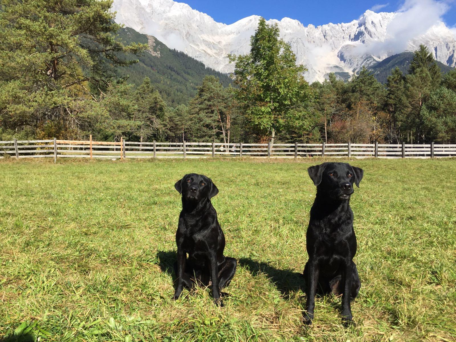Clover & Murphy (Herbst 2016)