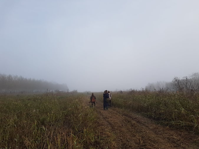 Nebel und hohes Schilfgestrüpp