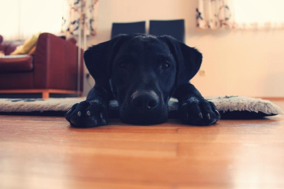 Murphy mit über 7.5 Monaten