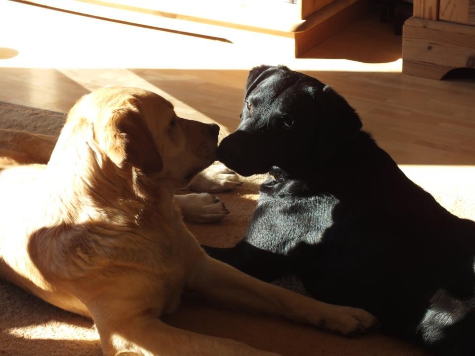 Bonnie und Clover (7.5 Monate)