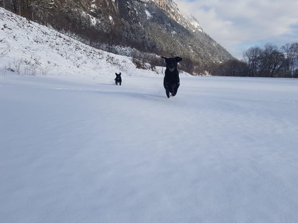 Sage im Schnee