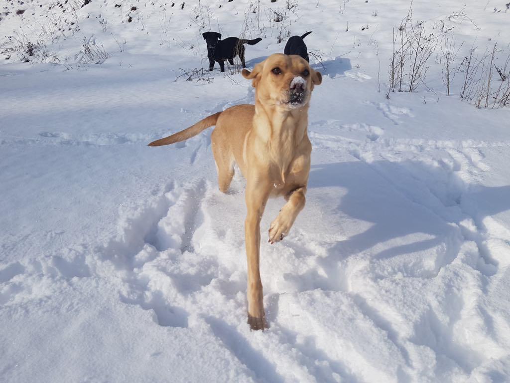 Erster Winter in den Bergen für Zoe