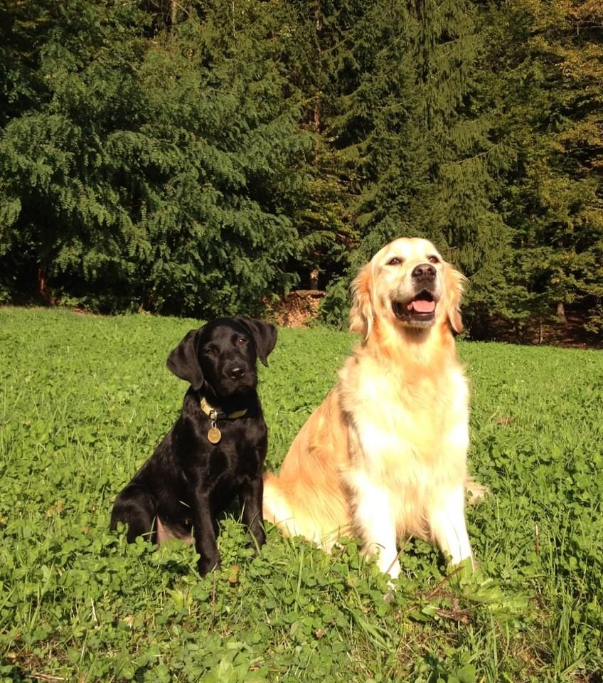 Murphy und Ally