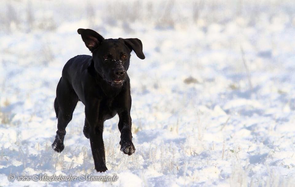 Django mit 8.5 Monaten