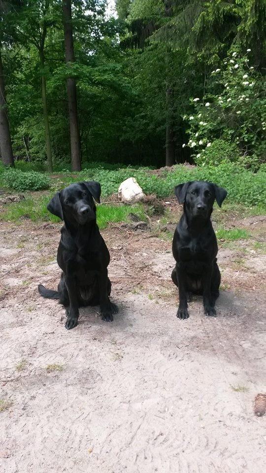 Baileys (re) mit ihrer Schwester Lotte (li) beim ersten Working Test - 1 Jahr alt